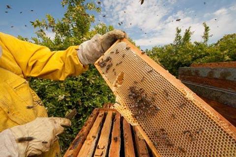 Россельхознадзор подготовил рекомендации для владельцев пасек и производителей продукции пчеловодства